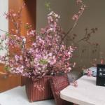 2018.3.12 河津桜