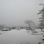 平成30年1月11日 雪
